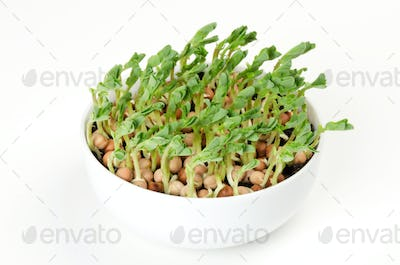 Snow pea microgreen in white porcelain bowl