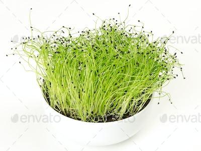 Leek microgreen in white porcelain bowl