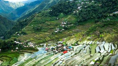 Rice terraces. Banaue, Philippines