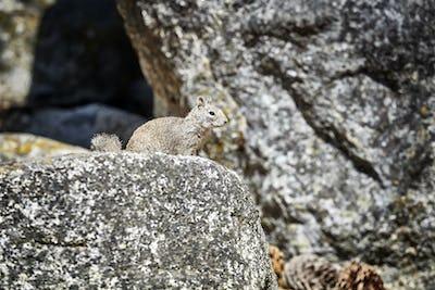 Squirrel in its natural habitat.
