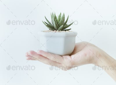 Closeup of hand holding a pot with a cactus