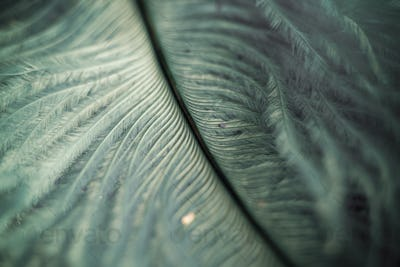 macro shot of feather and glitter