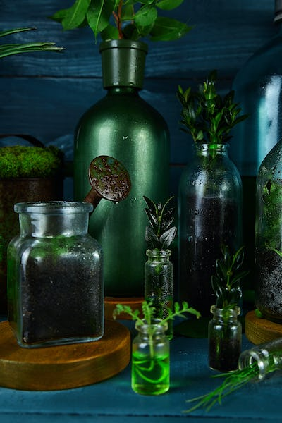 Mini glass vases and bottle with green  leaves, plants.