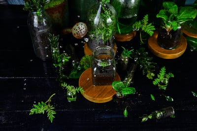 Mini glass vases and bottle with green  leaves, plants. Gardening.