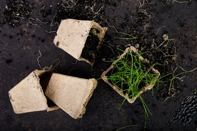 Peat pots with young seedlings, grass on a brown background.