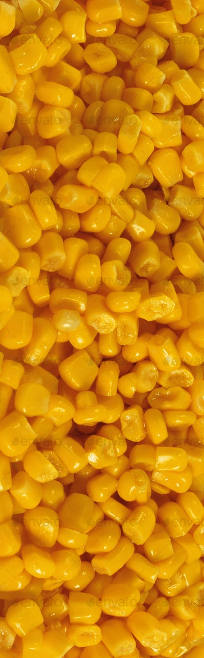 yellow corn grains