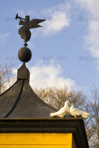 pigeons on a dovecote