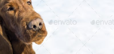 Cute dog nose banner