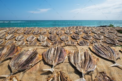 Traditional salted fish drying on racks in Midigama Srilanka