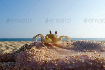 Small Crab on hand of caucasian woman on blue sky background.