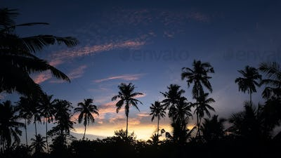 Tropical night view of palm trees and sunset sky