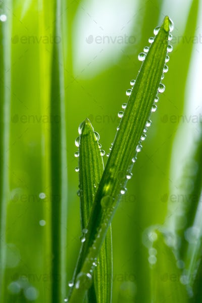 macro of wet grass