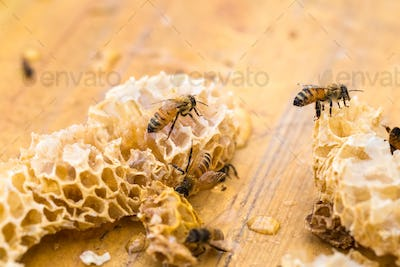 closeup of the worker bees on honeycomb