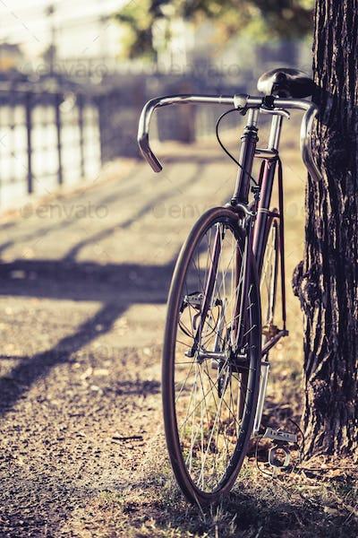 Bike road fixed gear bicycle