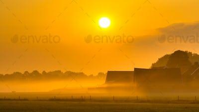 Orange farm sunrise agricutural scenery