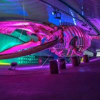 Whale skeleton on exhibition