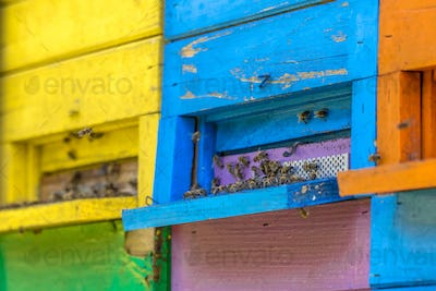 Colorful beehives close up