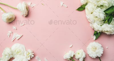 Flat-lay of white ranunculus flowers light pink background, wide composition
