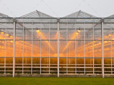 commercial glasshouse