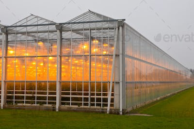 The exterior of a greenhouse