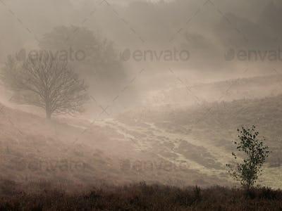Fairytale landscape