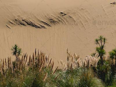 Sand dune background with lush vegetation