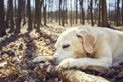 Playful dog in forest