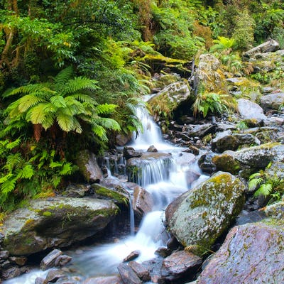 Waterfall in lush rain forest