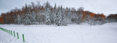 Winter scenery of snowcovered trees in city park