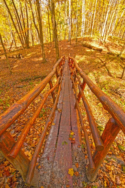 Hand Crafted Bridge in the Wilderness