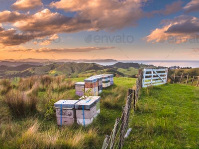 Colorful Bee Hives on Top of a Hill in Bay of Islands, New Zeala
