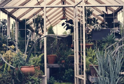 Greenhouse fulled with plants