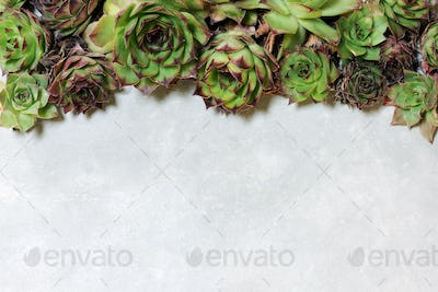 background with succulent plants