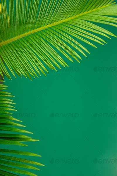 Summer green palm leave background