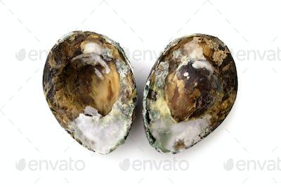 Rotten spoiled avocado isolated