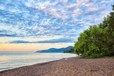 Willow on shore of Lake Baikal