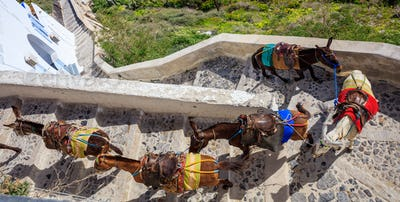 Santorini island, Greece - Donkeys at Fira village