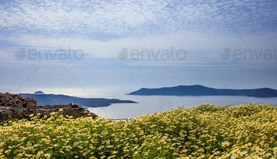 Flowers on the background of Nea Kameni - Santorini Greece