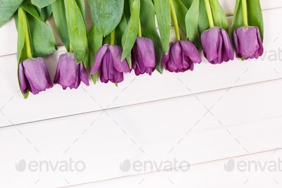 Bouquet of purple tulips for different occasions on white boards