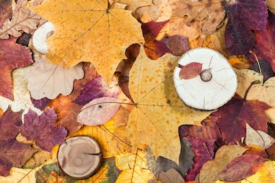 pied fallen autumn leaves and sawed woods
