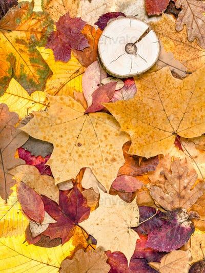 various fallen autumn leaves and sawed wood