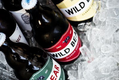 Closeup of beers chilling in ice