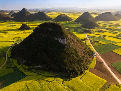 Yellow rapeseed (canola) flower field in spring, Luoping, China