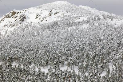 Winter mountain forest snowy landscape. Navacerrada, Spain. Horizontal
