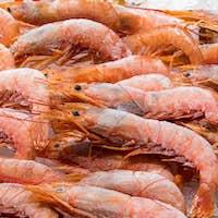 Frozen shrimps for sale