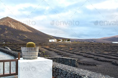 Vineyards in La Geria, Lanzarote Island