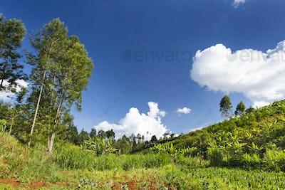 Beautiful Kenyan Highland Valley