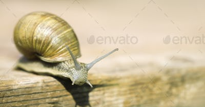 Slow snail - web banner with copy space
