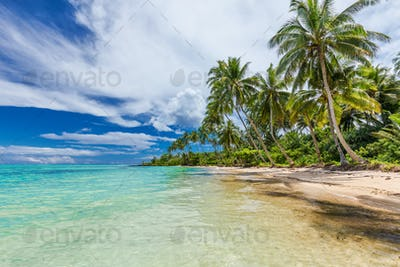 Wild beach with palm trees on south side of Upolu, Samoa Islands