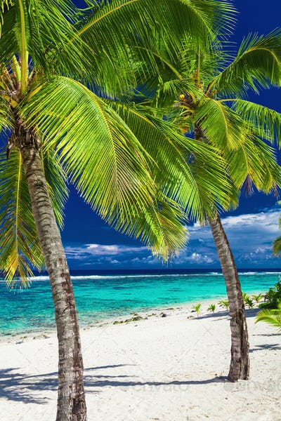 Tropical beach with rocks and palms on Cook Islands, Rarotonga
